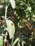 arb-bugs_2